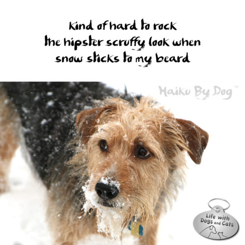 kind of hard to rock / the hipster scruffy look when / snow sticks to my beard #HaikuByDog #Haiku #Haikusday #MicroPoetry