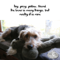 #HaikuByDog toy, prey, pillow, friend the bear is many things, but mostly it is mine