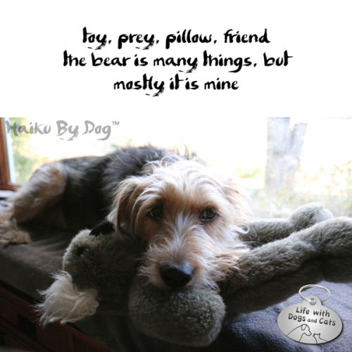 Haiku By Dog toy, prey, pillow, friend the bear is many things, but mostly it is mine