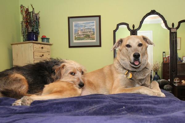 Tucker uses Jasper as a pillow.