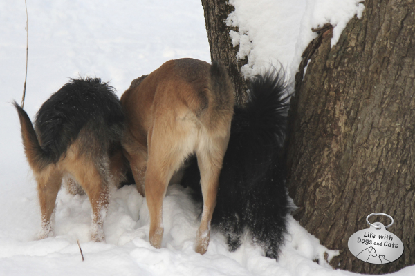 Tucker, Jasper and Lilah show off their tail ends.