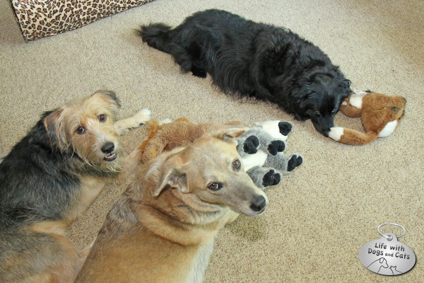 Three dogs, three toys