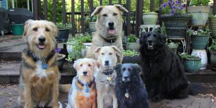 Story: Real pets meet flat pets