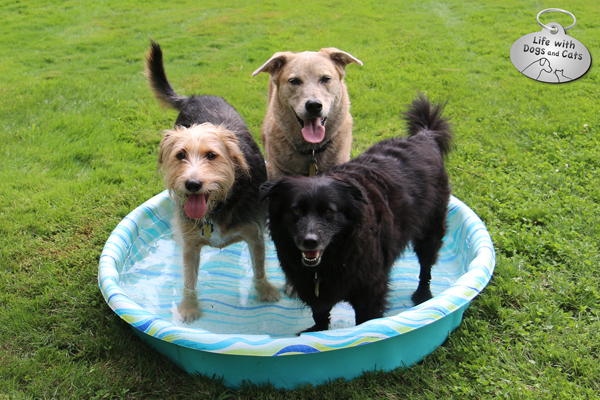 Tucker, Jasper and Lilah in the pool
