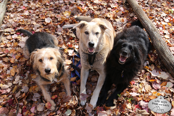 Tucker, Jasper and Lilah pause for a photo op on the path.