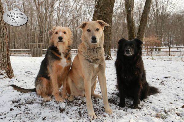 Tucker, Jasper and Lilah: 3 beautiful, incredibly awesome dogs