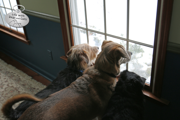 Tucker, Jasper and Lilah watch out the window for Mom's return.