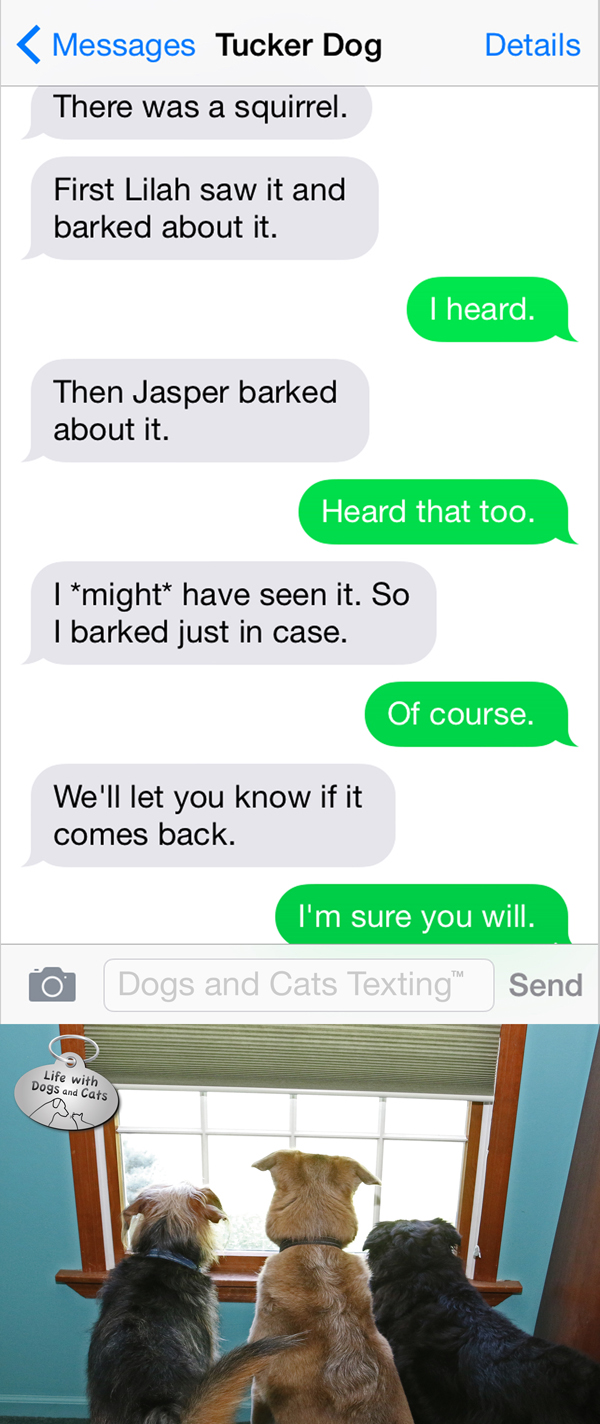 Text from Dog: There was a squirrel. We'll let you know if it comes back.