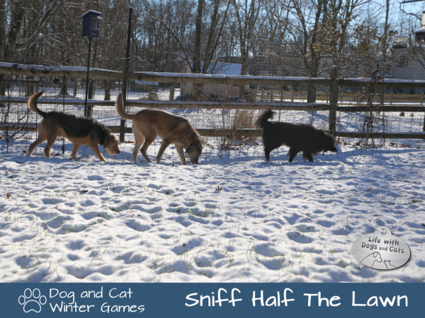 Dog and Cat Winter Games: Sniff Half The Lawn