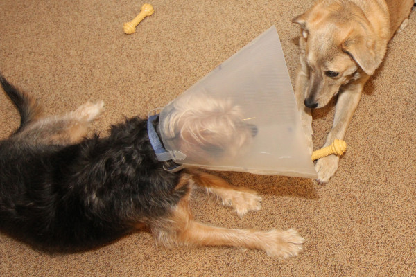 Now Jasper has the bone.