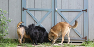 Story: Dogs vs. Groundhog