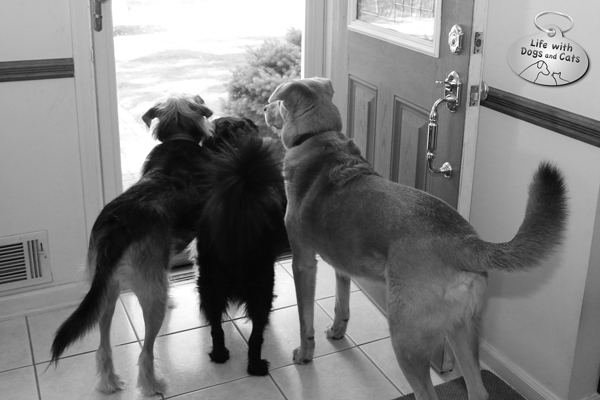 Tucker, Lilah and Jasper are sad that grandma is leaving