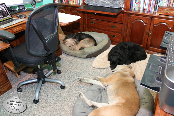 Tucker, Jasper & Lilah in the office