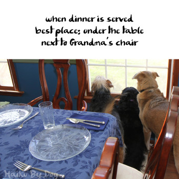 Haiku by Dog: when dinner is served / best place: under the table / next to Grandma's chair