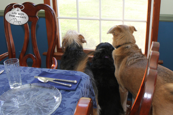 Tucker, Lilah and Jasper wait for company.