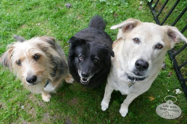 Tucker, Lilah and Jasper, the dogs of today.
