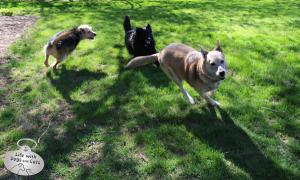 20 Ways Dogs Celebrate National Dog Day