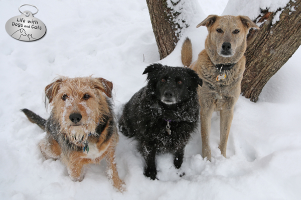 Tucker, Lilah and Jasper take a moment to pose in the snow.
