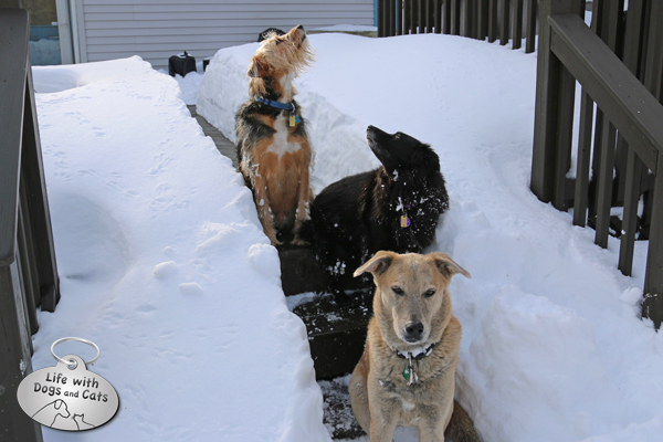 Tucker, Lilah and Jasper sit in a narrow snow canyon dug out after Blizzard Jonas.