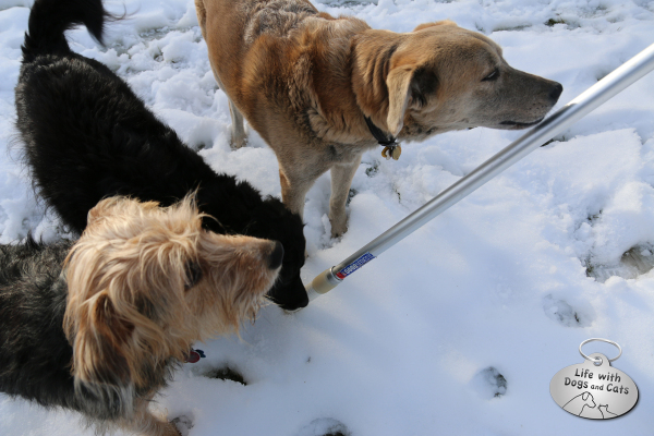 Dogs inspecting the pole