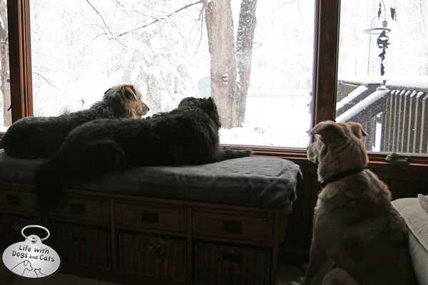 Tucker, Lilah and Jasper watch the snow fall on the first day of spring