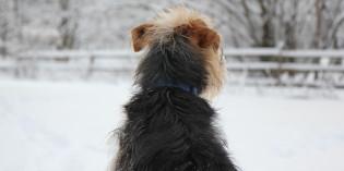 Haiku by Dog: Artist