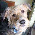 Tucker at back door cute