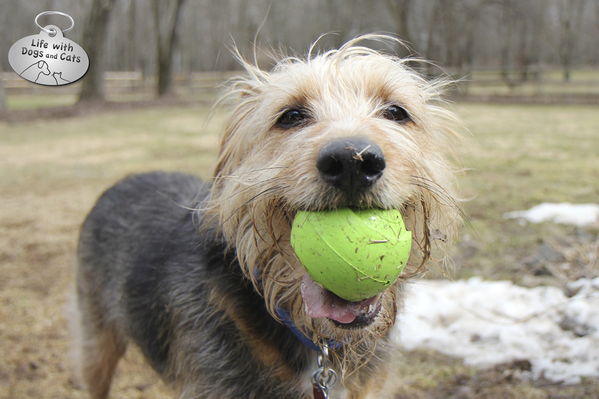 Tucker the dog wants to play ball.