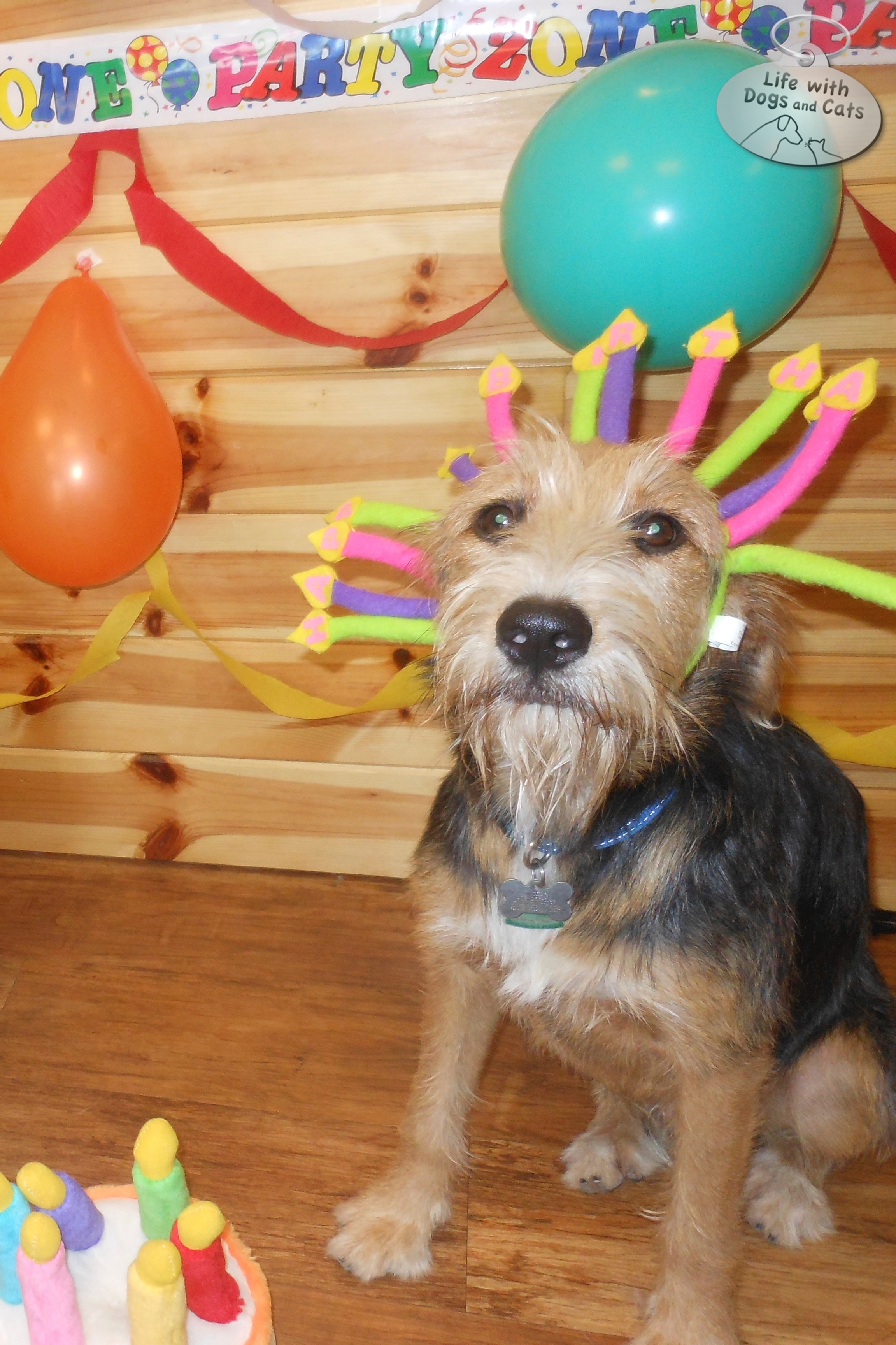 Tucker was invited to join another doggy's birthday party at Camp Bow Wow. He was, truly, a party animal.