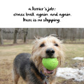 Haiku by Dog: a terrier's job / chase ball. again. and again. / there is no stopping.