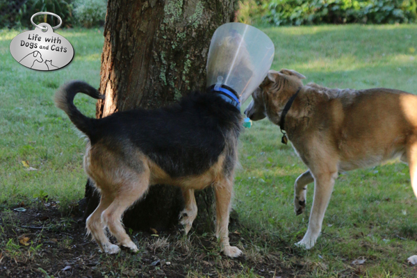 Maybe the squirrel will fall and I'll catch him with my cone.