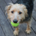 Tucker and his beloved Ball.