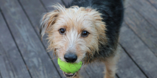 How Do I Love Thee, Ball? A Dog Sonnet for #NationalPoetryMonth