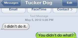 Text from Dog: Blame it on the cow