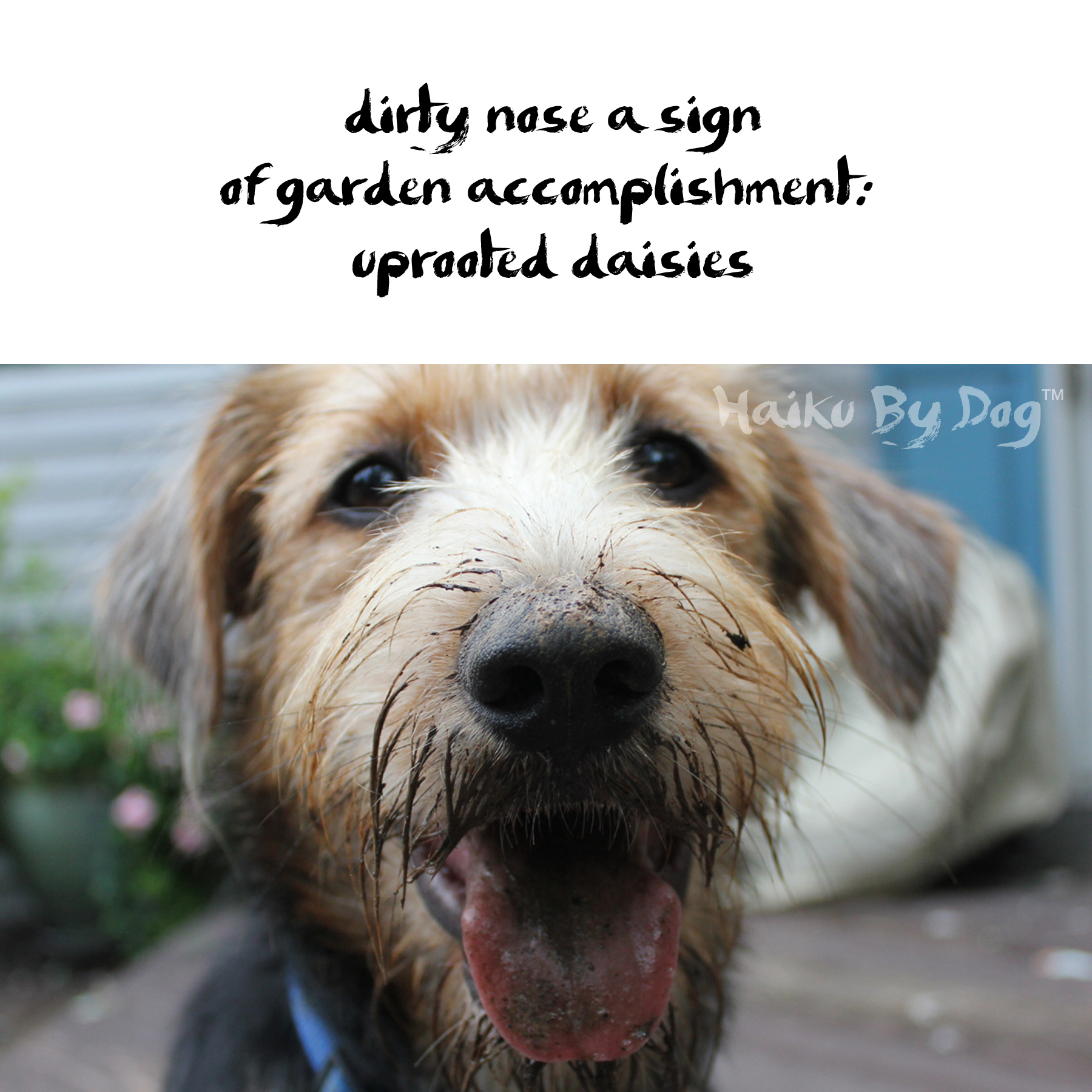 Haiku By Dog Accomplishment Life With Dogs And Cats