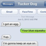 Text from Dog: Keeping an eye on things