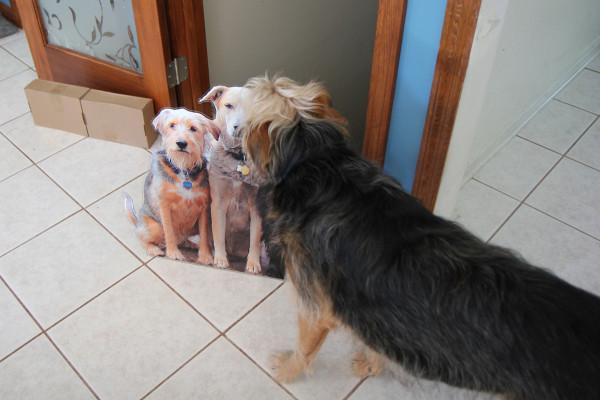 Tucker sniffs the flat pets