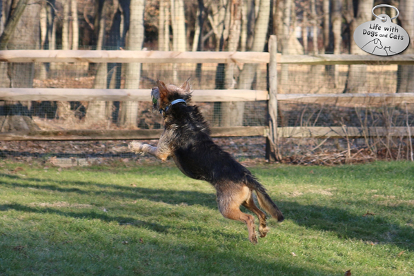 Tucker catches a ball mid-flight.