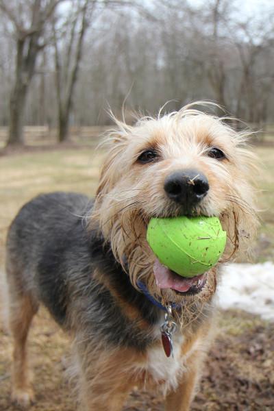 Tucker loves to play Ball