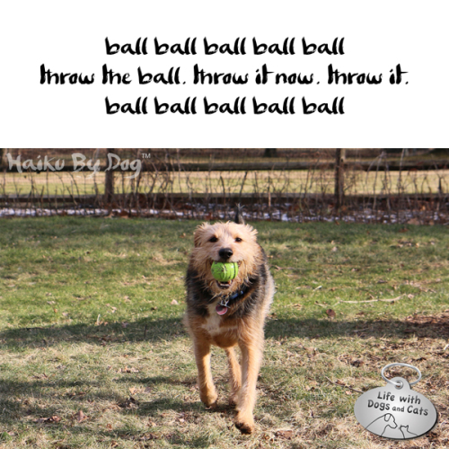 Haiku by Dog: ball ball ball ball ball / throw it. throw the ball. throw it. / ball ball ball ball ball