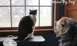 Haiku by Dog: Certain
