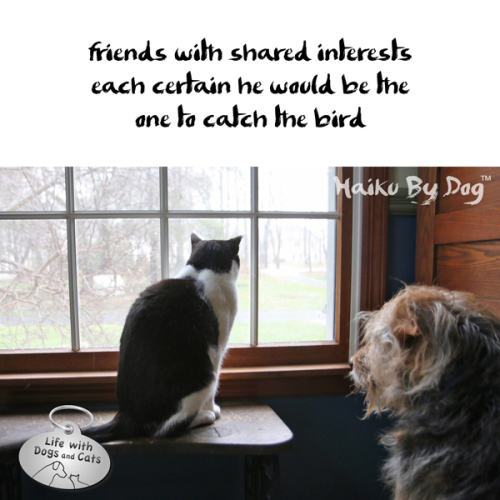 Haiku by Dog: friends with shared interests / each certain he would be the / one to catch the bird