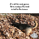 Haiku by Dog: Leaves