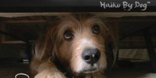 Haiku by Dog: Finished
