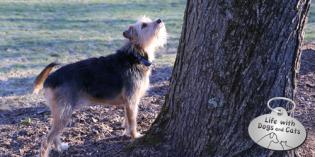 Haiku by Dog: Ground