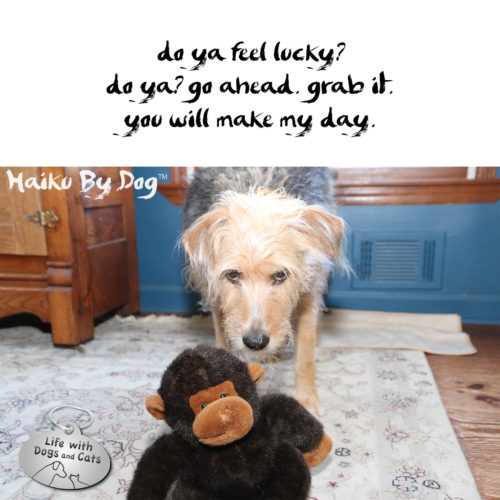 do you feel lucky? / do you? go ahead, grab it. / you will make my day #HaikuByDog #MicroPoetry #Haikusday