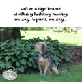 Haiku by Dog: safe on a high branch / chattering twitching taunting / one day, Squirrel, one day...