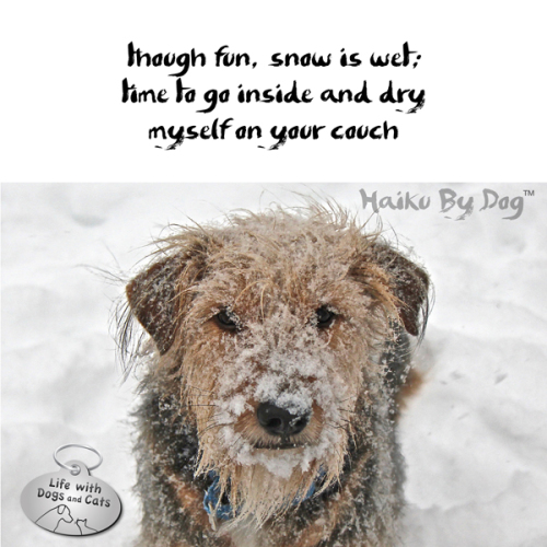 Haiku by Dog: though fun, snow is wet; / time to go inside and dry / myself on your couch