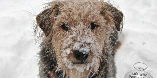 Haiku by Dog: Not