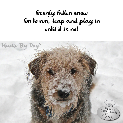 freshly fallen snow / fun to run, leap and play in / until it is not